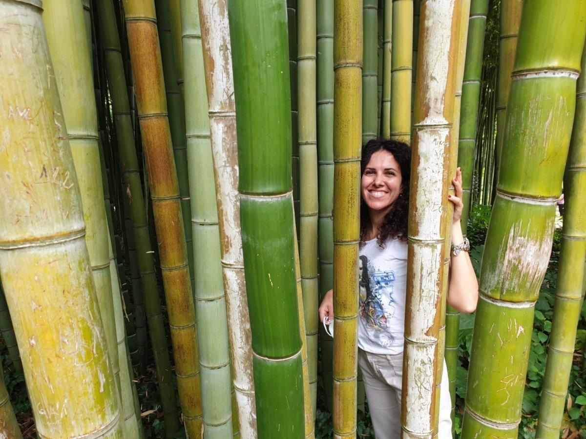 Foresta di bambù al giardin o di Ninfa