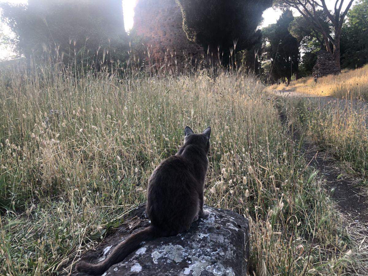 Gatto al parco Appia antica