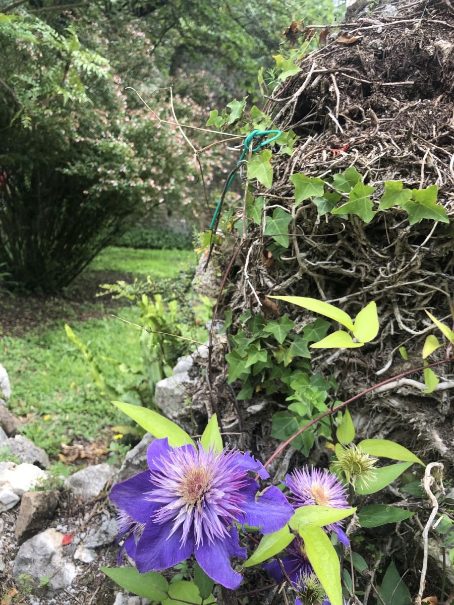 Fiume Ninfa e specie floreale